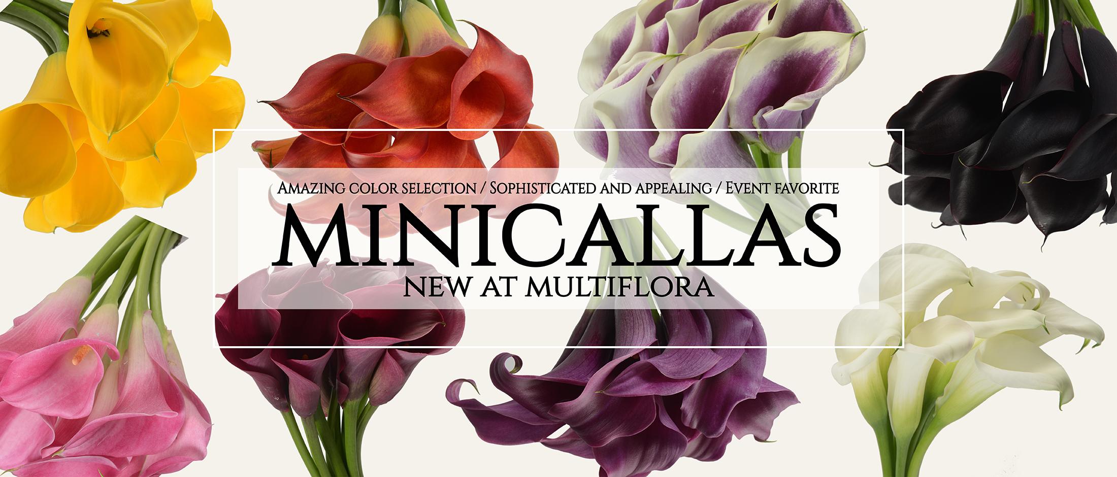 MINICALLAS-01-01-01-03-03-03