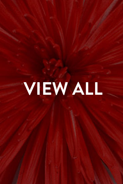 view-holydays