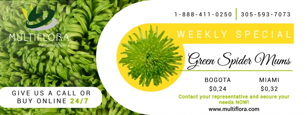 Green-Spider-special-week