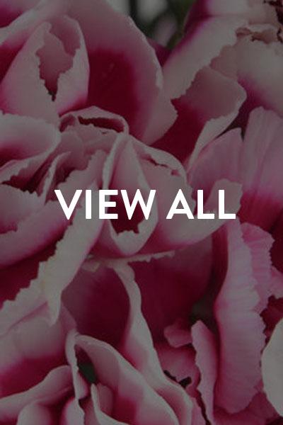 view-bouquets